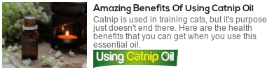 catnip essential oil uses