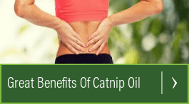 catnip essential oil for the body
