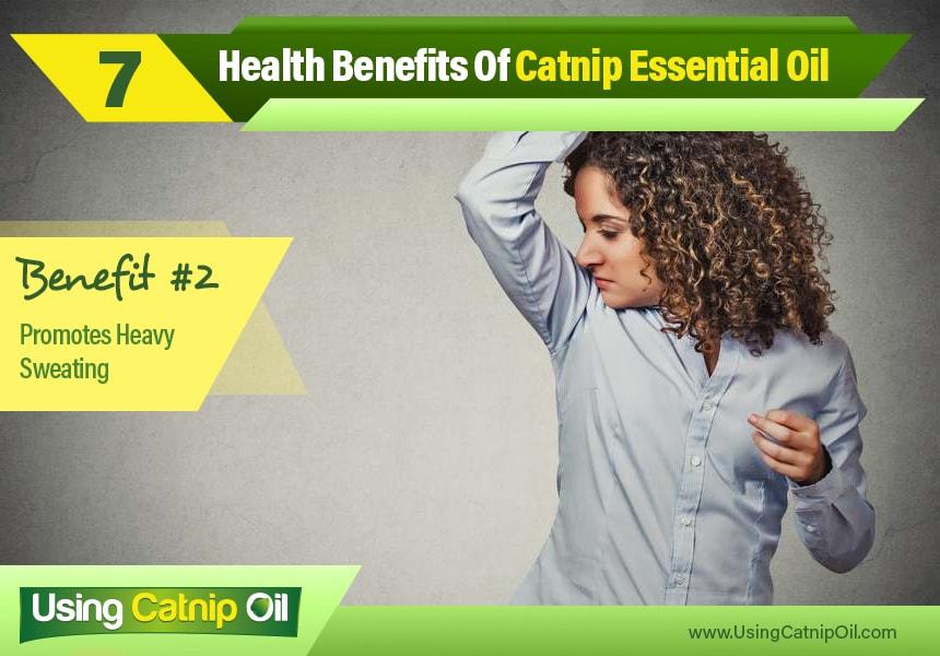 catnip essential oil for the body