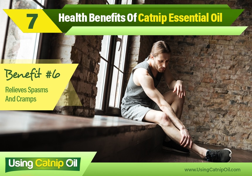 catnip essential oil uses