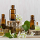7 Practical Ways To Use Catnip Essential Oil