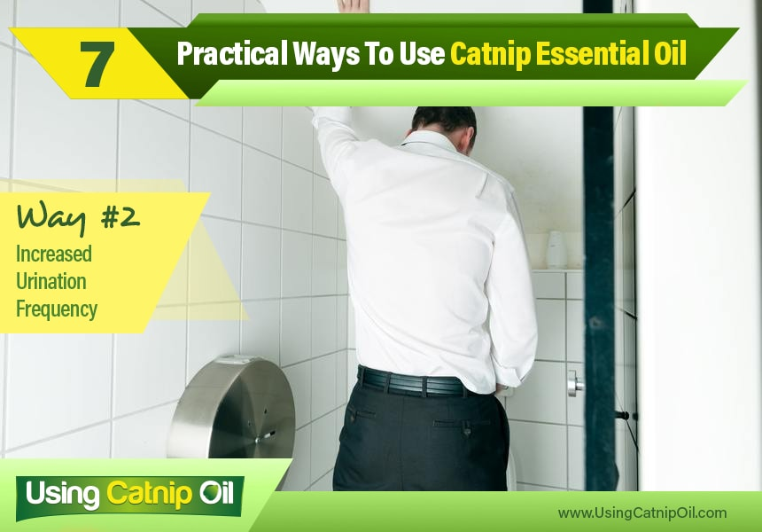 benefits of catnip essential oil